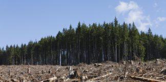 Foreste e cambiamenti climatici: le buone pratiche che aiutano l'ambiente