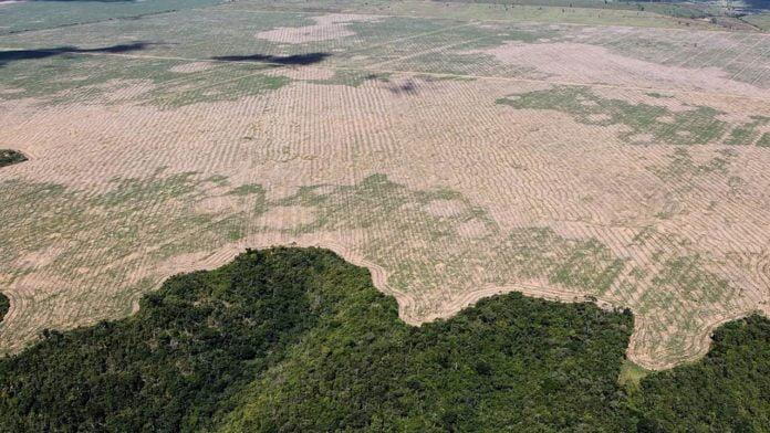 Amazzonia e ambiente a rischio: tra disastro ambientale e emergenza ambientale