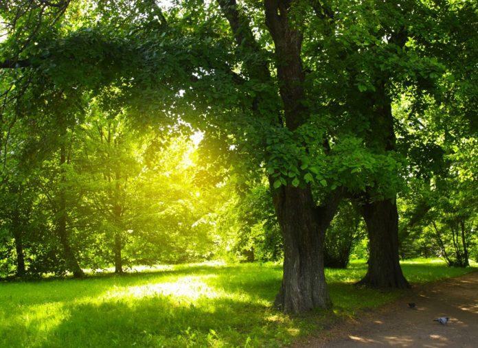 Metodi naturali contro la crisi climatica: rivalutare un albero