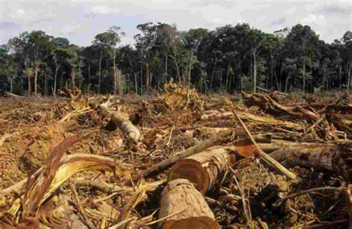 Perché il governo deve occuparsi dell'emergenza ambientale