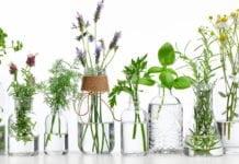 Oli essenziali: tutti i benefici per il corpo e la mente