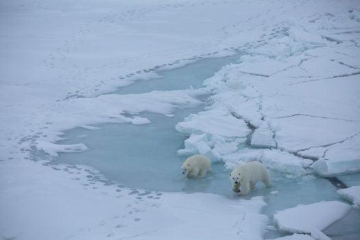 A che punto è MOSAiC, la più grande missione di ricerca mai fatta in Artico