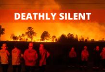 Un cimitero chiamato Australia: le conseguenze degli incendi