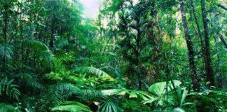 Foreste pluviali - anidride carbonica
