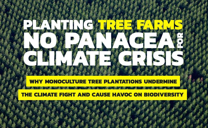 Greenpeace avvisa: piantare alberi non ci salverà dai cambiamenti climatici