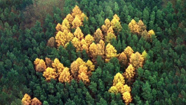 ecofascismo ambientalismo