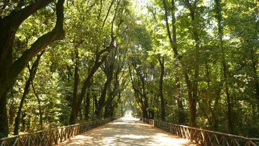Real Bosco di Capodimonte: il polmone verde di Napoli