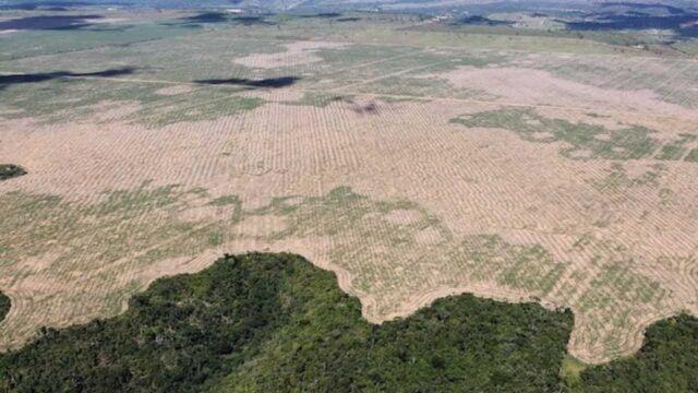 Soia - deforestazione