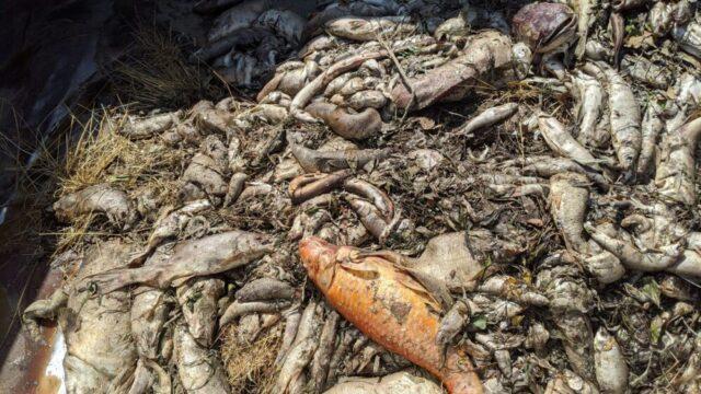 Nestlé denunciata: aumentano le cause legali per danni ambientali