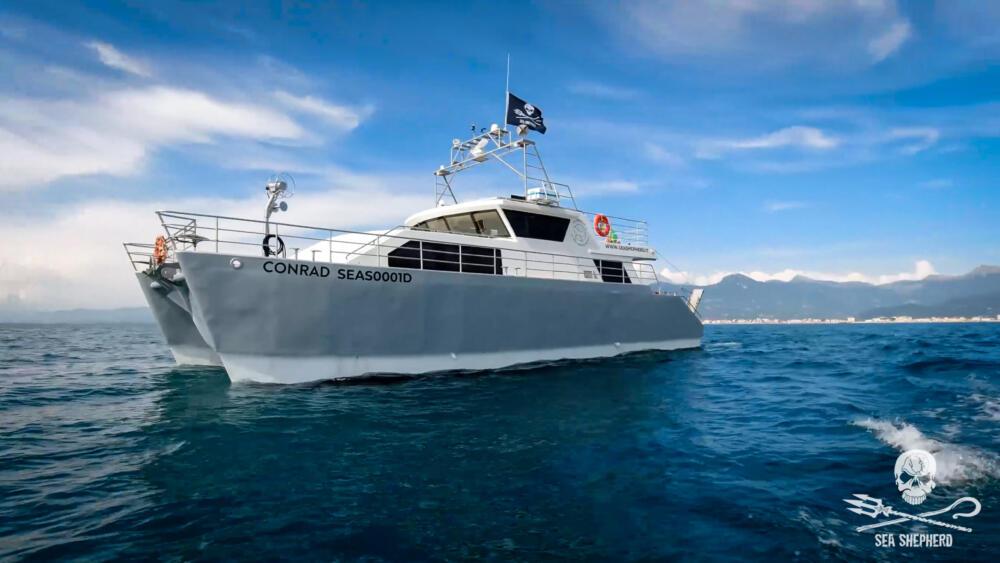 """La Sea Shepherd torna in mare, al via l'Operazione Siso con la """"Conrad"""""""