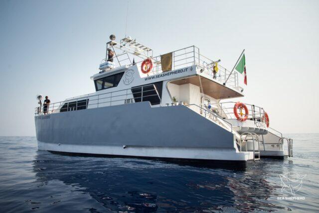 La Sea Shepherd torna in mare, al via l'Operazione Siso con la