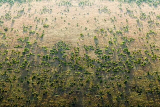 La Grande Muraglia Verde per contenere siccità e desertificazione in Africa