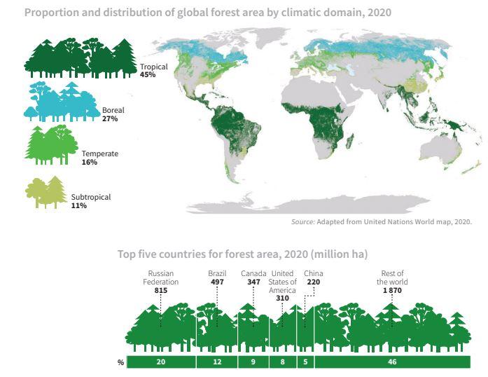 foreste, infrastrutture, cambiamento climatico