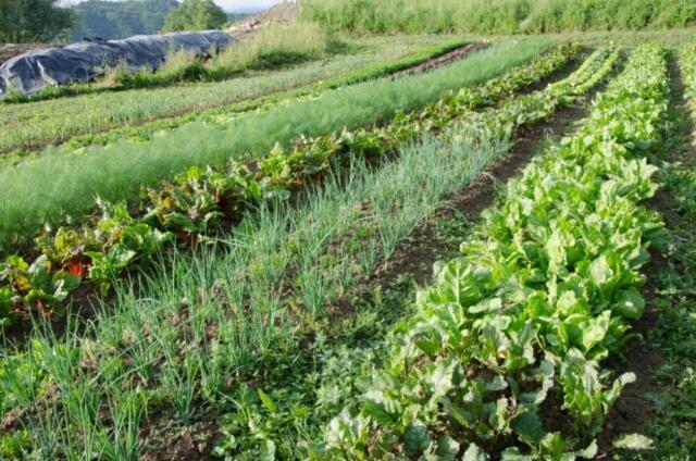 Agricoltura biointensiva: massimizzare le rendite in maniera ecosostenibile
