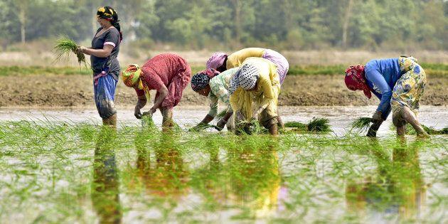 L'agricoltura indiana