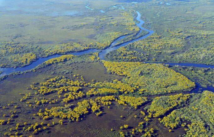 Pantanal e zone umide: l'insostenibilità della produzione di carne e soia