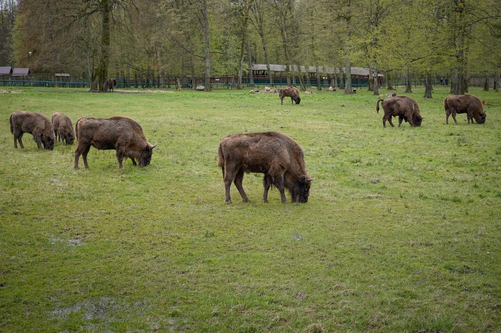 Białowieża in pericolo: viaggio nell'ultima foresta vergine d'Europa