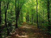 Foreste: i grandi alleati contro il cambiamento climatico