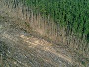 L'Unione Europea è tra i maggiori responsabili della deforestazione tropicale