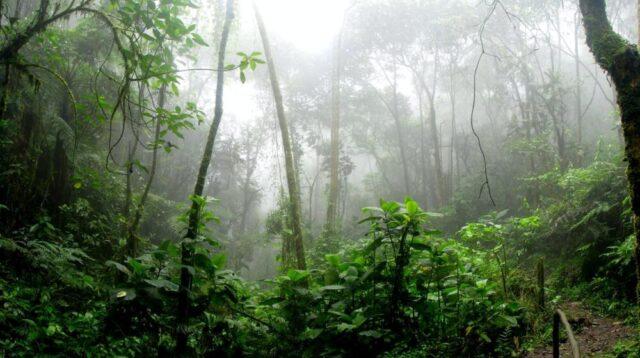 amazzonia-emissioni-deforestazione