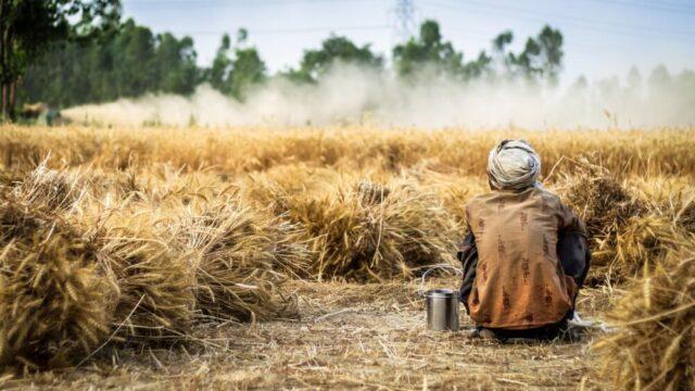 Camara Fantamadi: nelle campagne dove batte il sole si muore di fatica