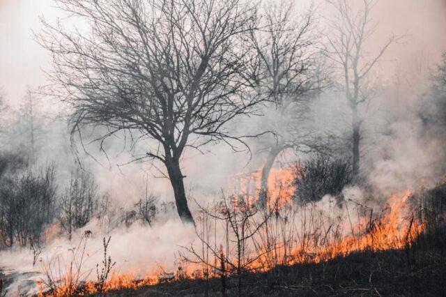 Caldo record in Europa: è l'effetto del cambiamento climatico