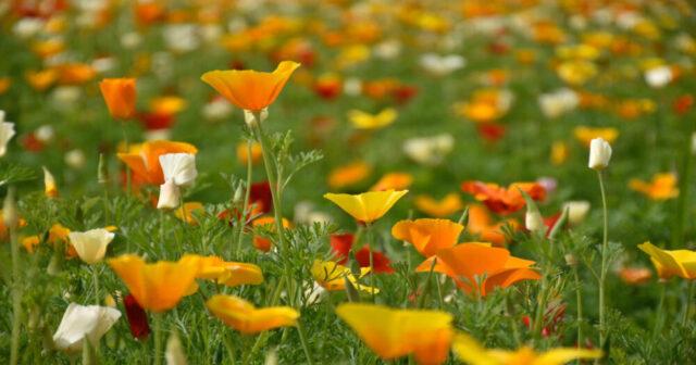 Su un letto di fiori (fonte immagine: ilbolive.unipd.it)