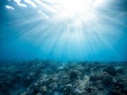 Barriere coralline: perso il 14% in appena dieci anni